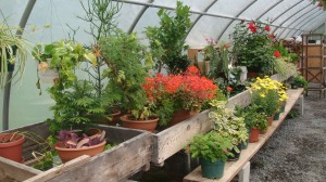 House Plants in the Greenhouse