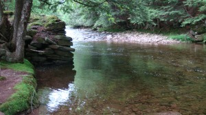Water Hole in the Creek