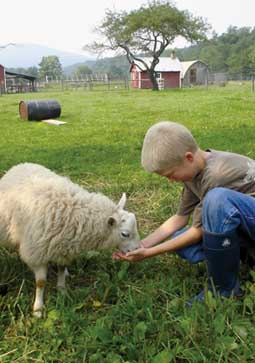 Playing with the Sheep at the Farm